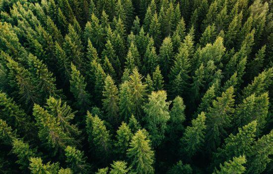 Управление инновациями в лесопромышленном комплексе